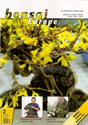 Bonsai Europe IT #02