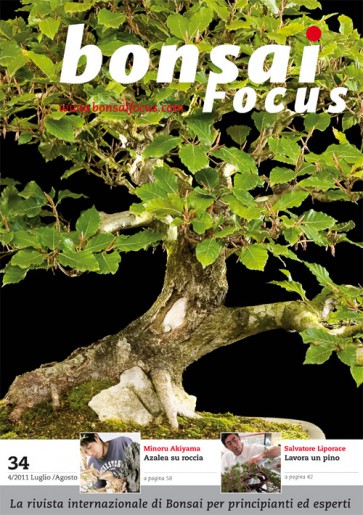 Bonsai Focus IT #34
