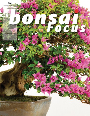 Bonsai Focus IT #52