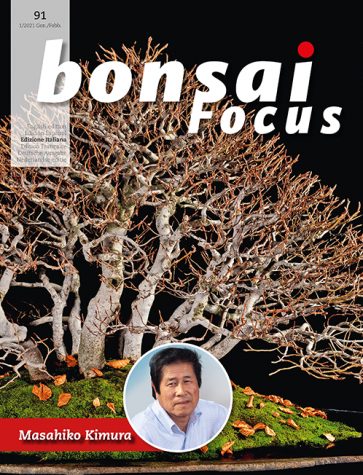 Bonsai Focus IT #91