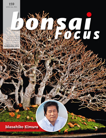 Bonsai Focus NL #159
