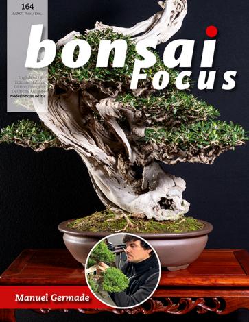Bonsai Focus NL #164