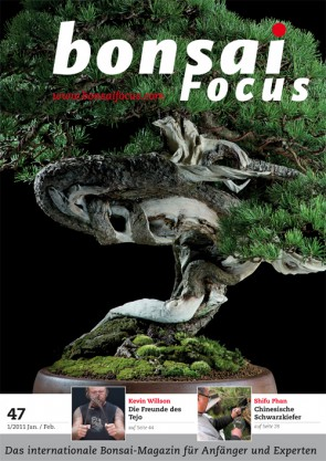 Bonsai Focus DE #47