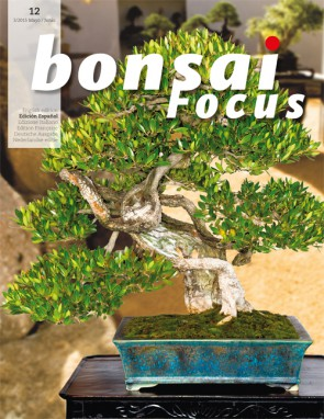 Bonsai Focus ES #12