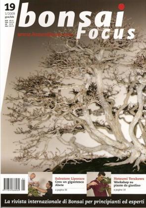 Bonsai Focus  IT #19