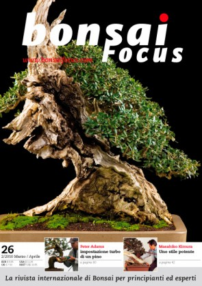 Bonsai Focus IT #26