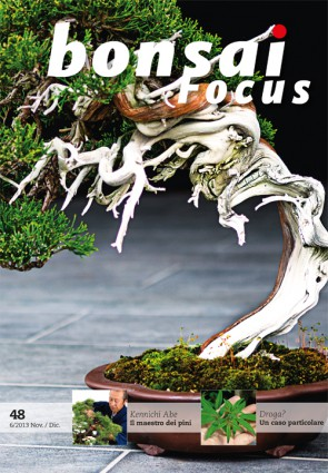 Bonsai Focus IT #48