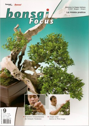 Bonsai Focus  IT #09