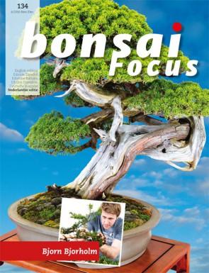 Bonsai Focus NL #134