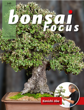Bonsai Focus NL #149