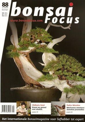 Bonsai Focus NL #88