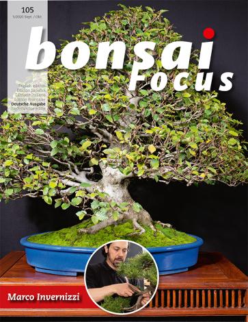 Bonsai Focus DE #105