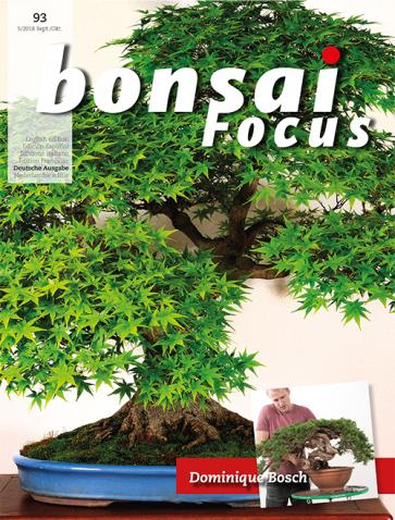 Bonsai Focus DE #93