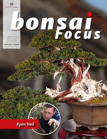 Bonsai Focus DE #98