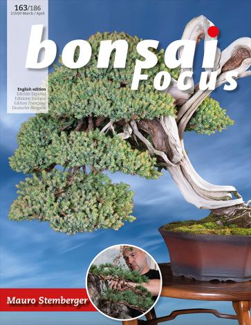 Bonsai Focus EN #163/#186