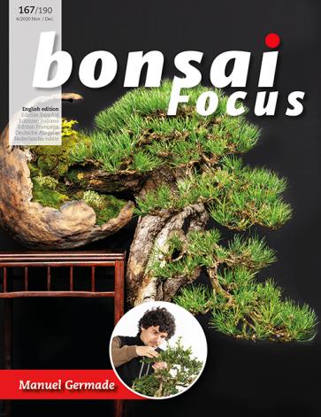 Bonsai Focus EN #167/#190