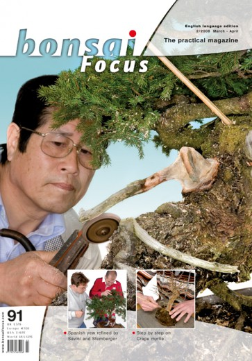 Bonsai Focus EN #91