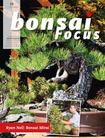 Bonsai Focus ES #19