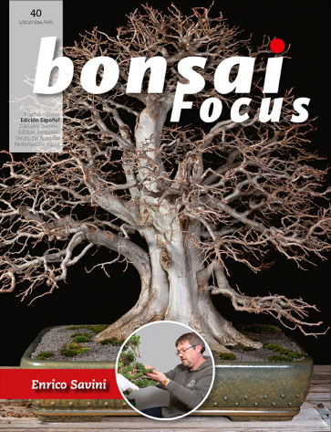 Bonsai Focus ES #40