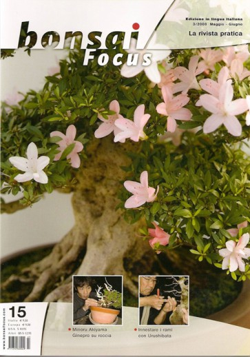 Bonsai Focus IT #15