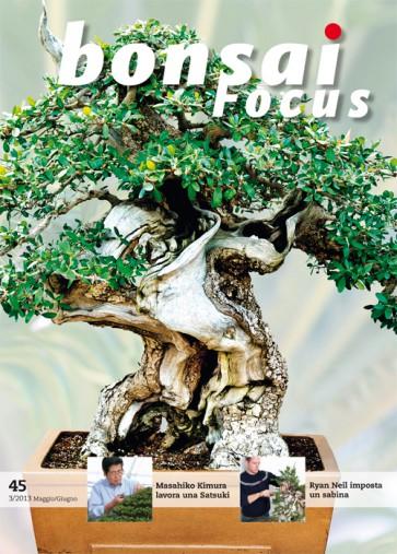 Bonsai Focus IT #45