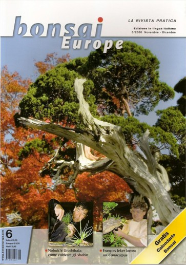 Bonsai Europe IT #06
