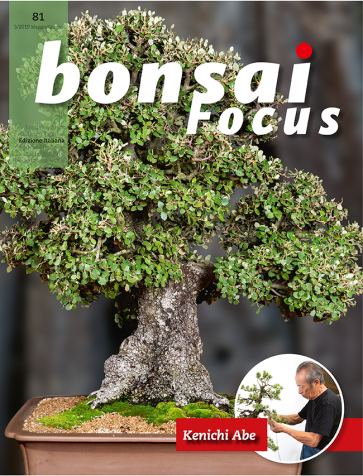Bonsai Focus IT #81