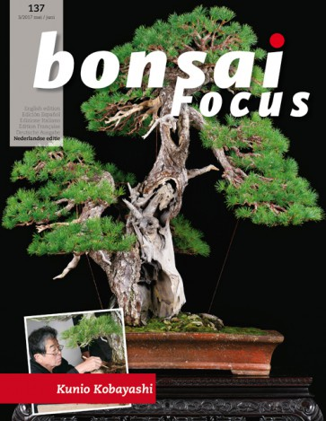 Bonsai Focus NL #137