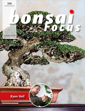 Bonsai Focus DE #104