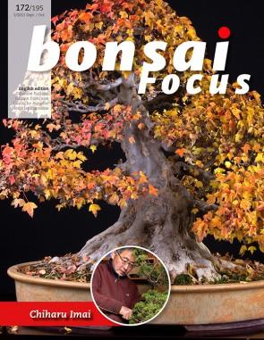 Bonsai Focus EN #172/#195