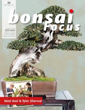 Bonsai Focus ES #26