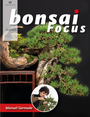 Bonsai Focus ES #45