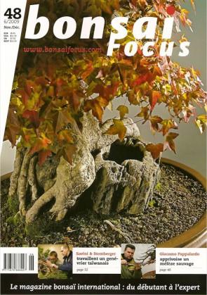 Bonsai Focus FR #48