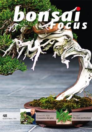 Bonsai Focus IT #48