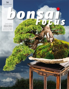 Bonsai Focus IT #56