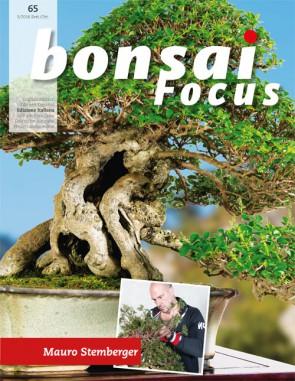 Bonsai Focus IT #65