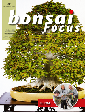 Bonsai Focus IT #80