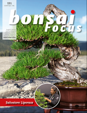 Bonsai Focus NL #151