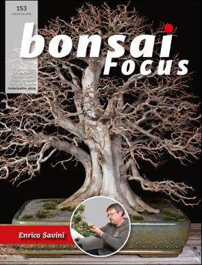 Bonsai Focus NL #153