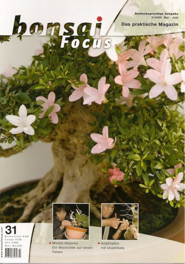 Bonsai Focus DE #31