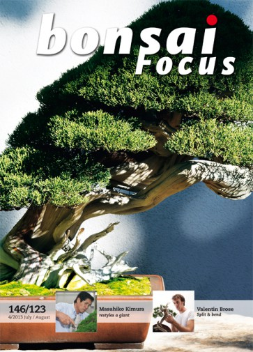 Bonsai Focus EN #123/#146