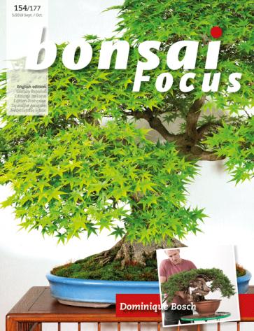 Bonsai Focus EN #154/#177