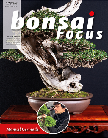 Bonsai Focus EN #173/#196