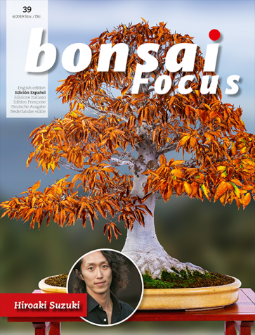 Bonsai Focus ES #39