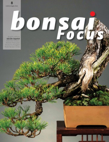 Bonsai Focus ES #08