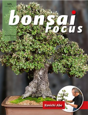 Bonsai Focus FR #105