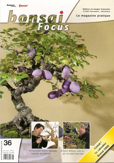Bonsai Focus FR #36