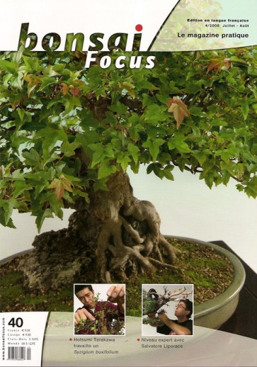 Bonsai Focus FR #40