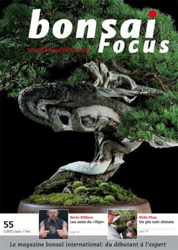 Bonsai Focus FR #55