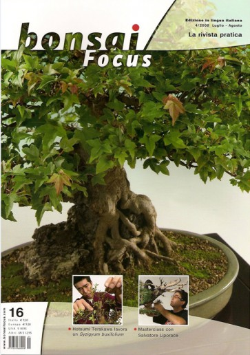 Bonsai Focus IT #16
